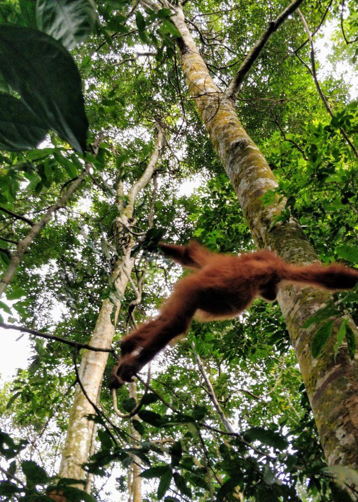 Jungle Track to Jungle